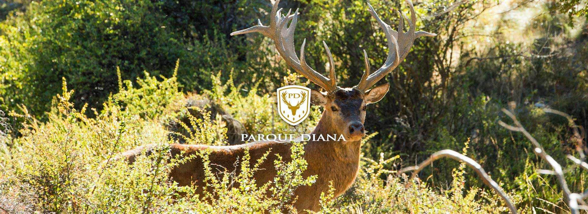 TEO | Parque Diana - Patagonia Argentina