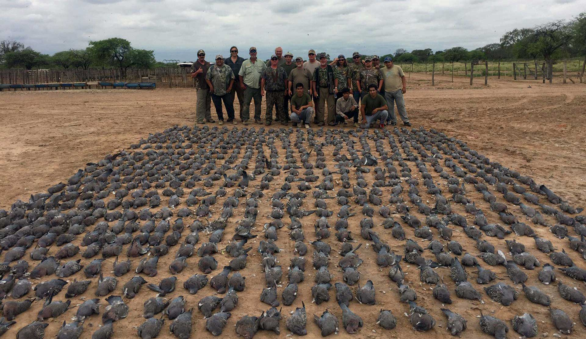 Doves hunted in Santo Domingo